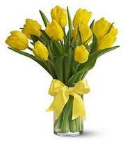 Предлагаю свежие тюльпаны высокого качества по оптовым ценам!