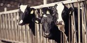 Работник молочной фермы/Канада